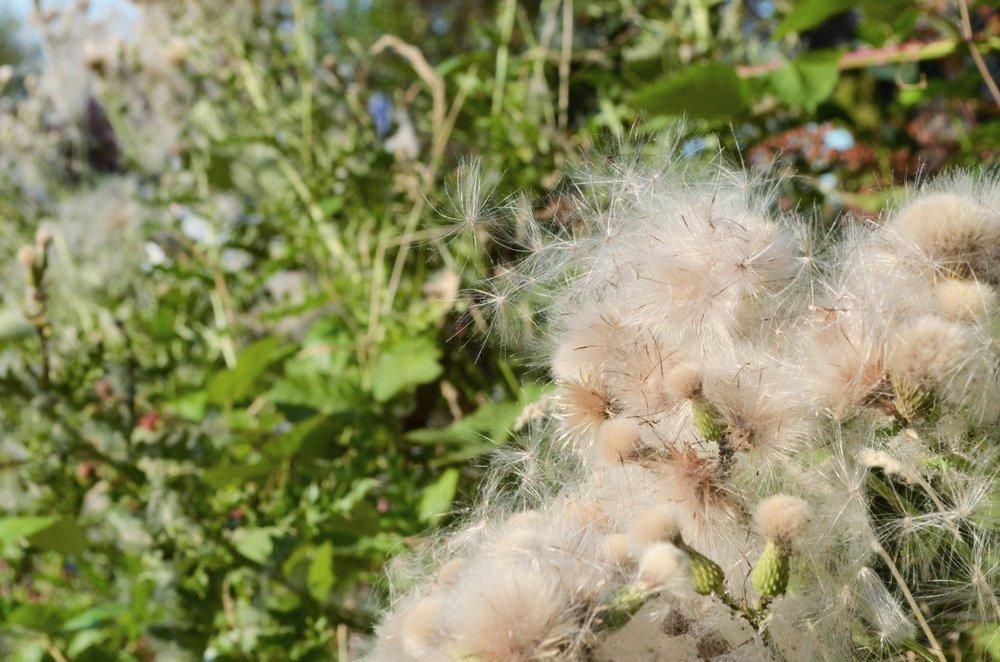 Pollen asthma triggers