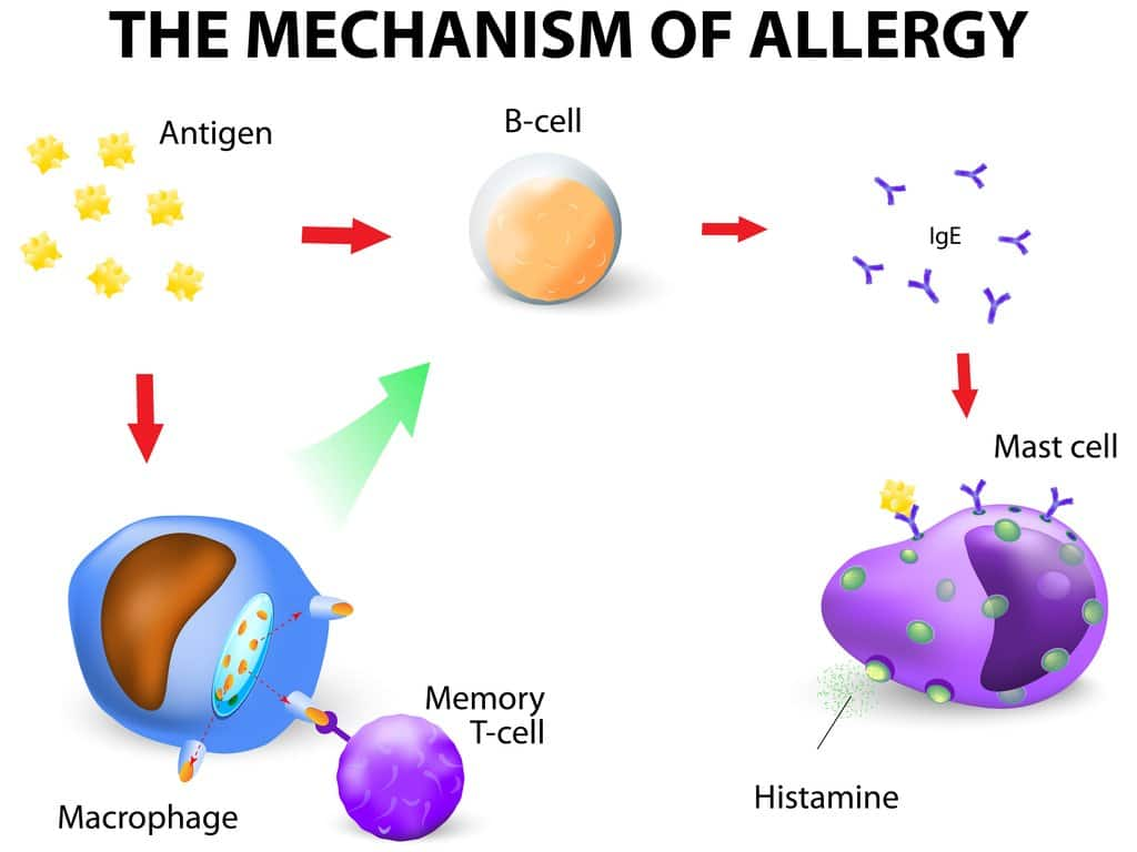 asthma from allergies