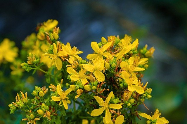 st johns wort interactions